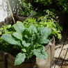 balconnière-plantes-batyline-17l-potiron