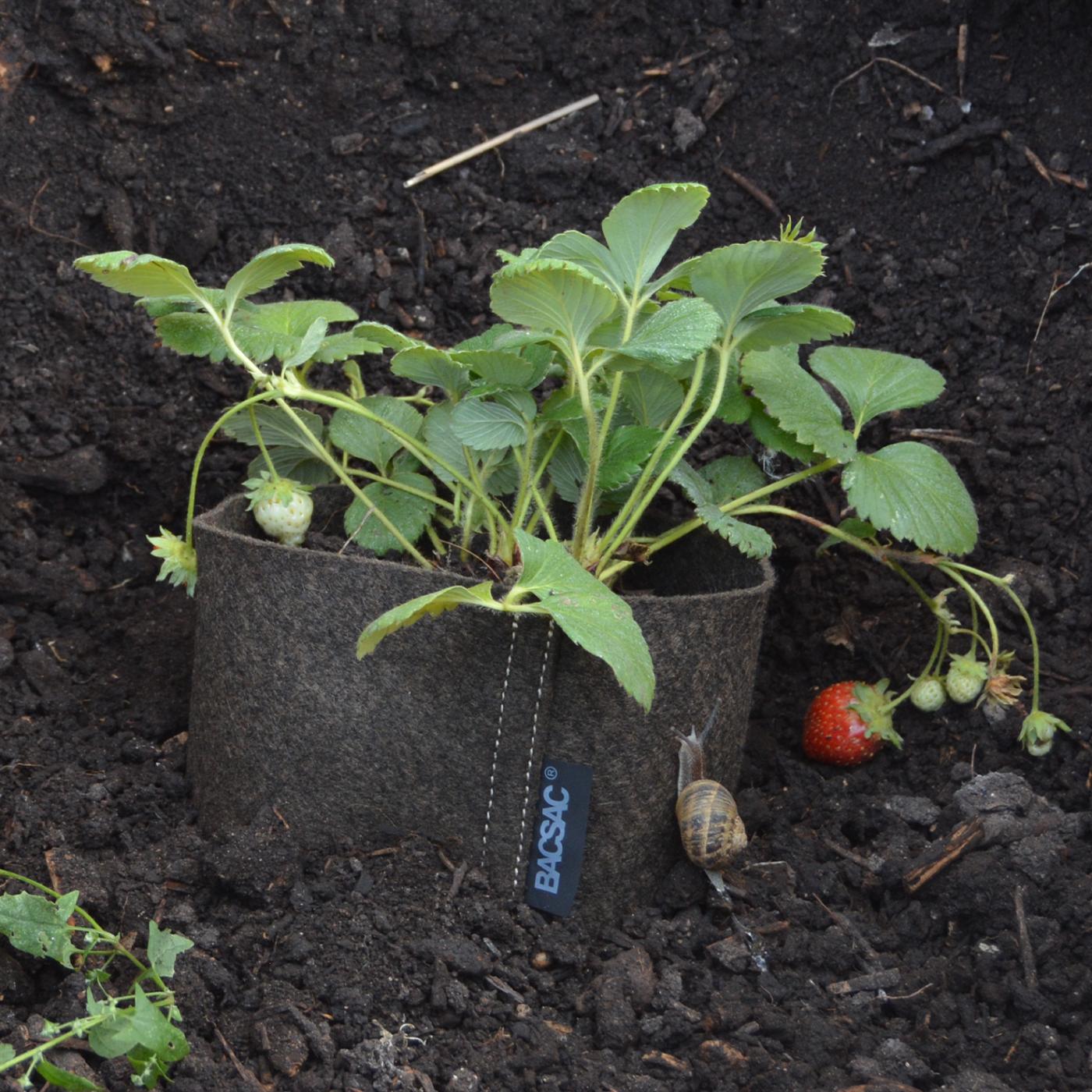 Hanging pot (10L) Avocado