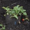Pot en Batyline rond à suspendre avocado 10 litres