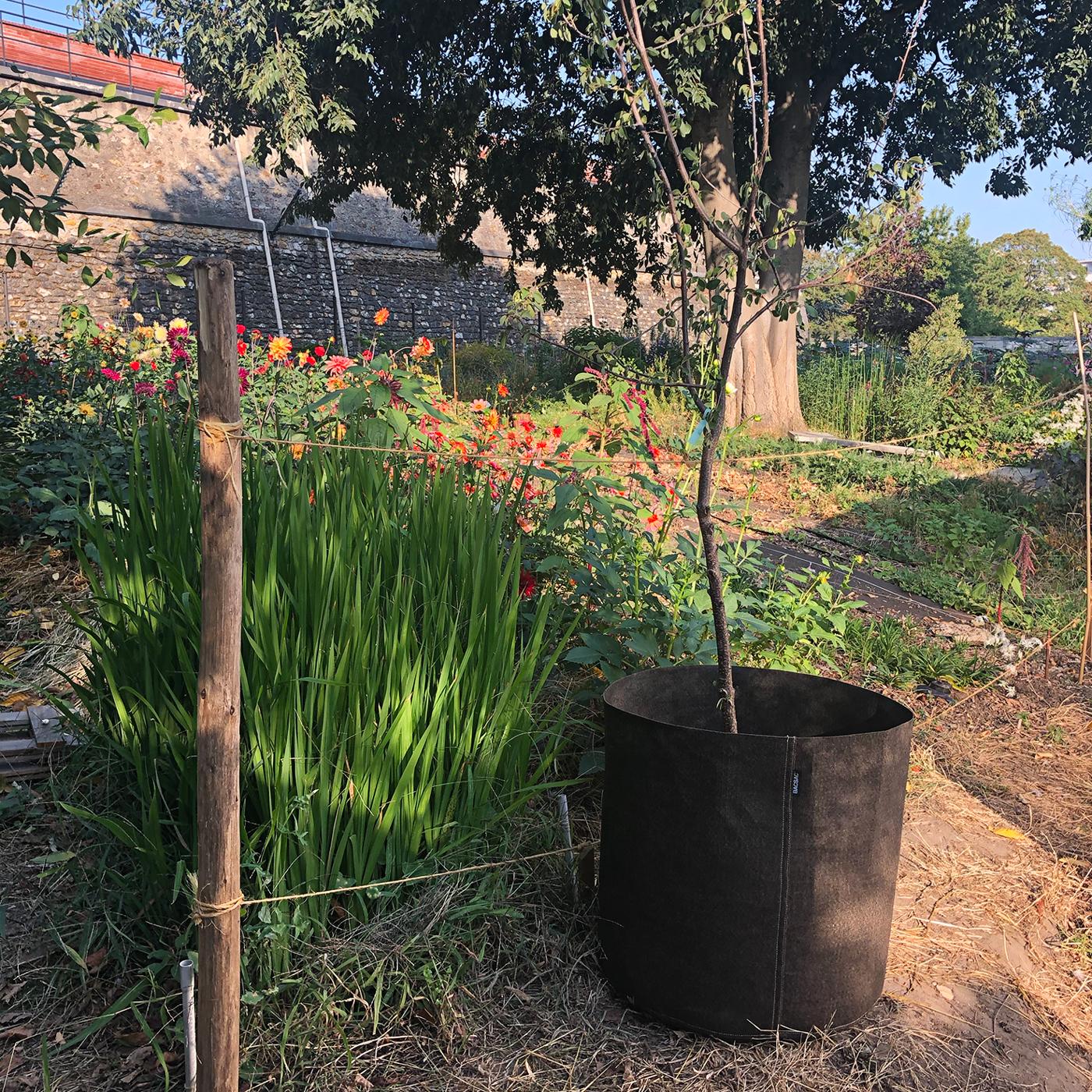 Bacsquare 9 kitchen garden (330L) Potiron