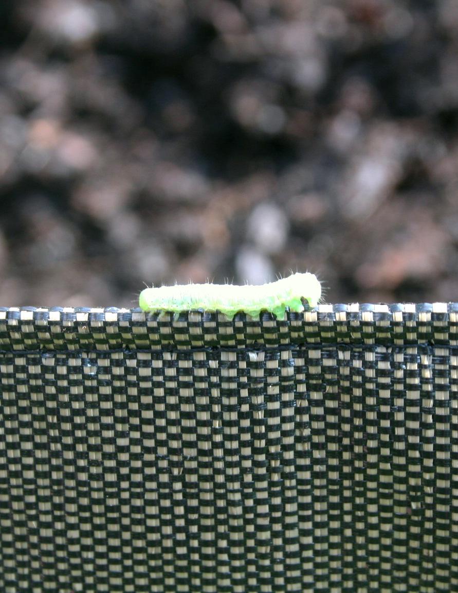 Nos 5 méthodes préférées pour fabriquer son propre insecticide naturel