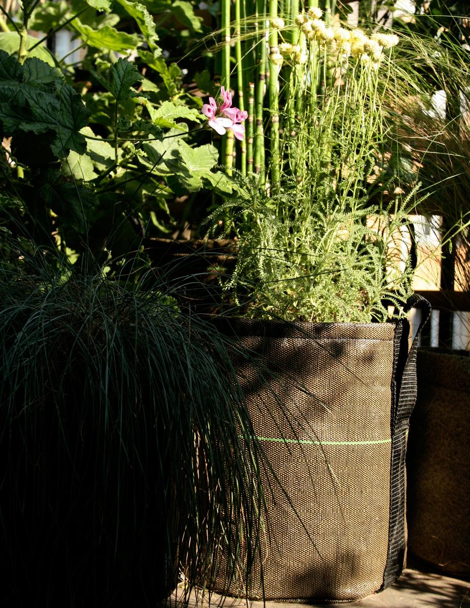 Les plantes anti moustiques, guêpes et mouches